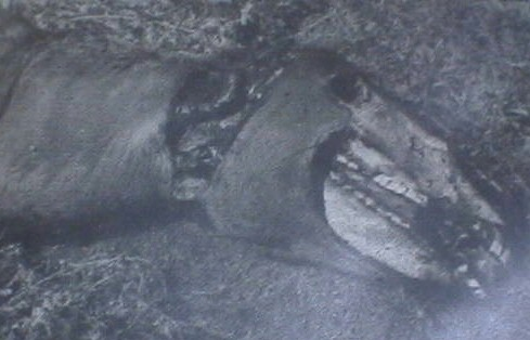ufo horse mutilation